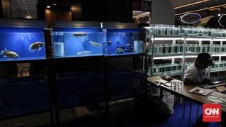 Pengusaha Ikan Hias Minta Pemerintah Tekan Biaya Pengiriman
