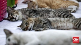 12 Tanaman Beracun Bagi Kucing