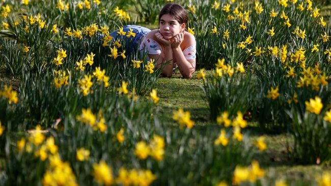 A woman relaxes among daffodils in unseasonably warm weather in St James's Park in London on February 22, 2019. (Photo by Tolga Akmen / AFP)