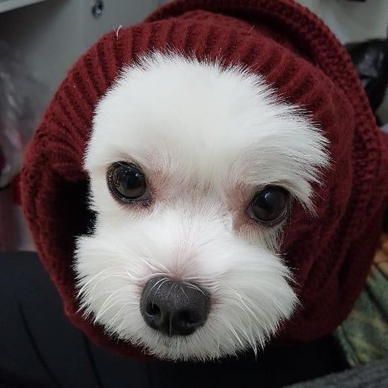 Anjing putih imut ini peliharaan Oh Seung Yun, pemeran Lee Yoon dalam dramaThe Last Empress.