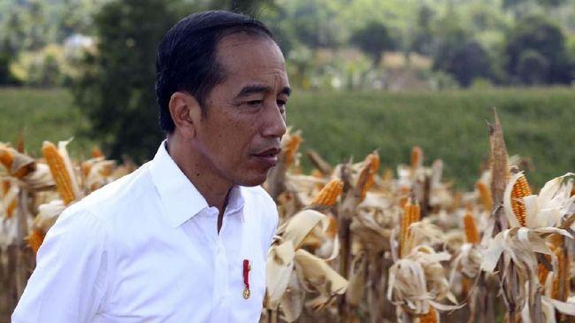 Jokowi mengapresiasi Polri soal penangkapan terduga teroris Abu Hamzah di Sibolga yang merupakan pengembangan dari penangkapan terduga teroris di Lampung.