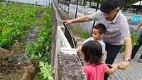 <p>Enggak cuma berkebun, rupanya Amien pun mengajak para cucunya melihat rusa. Amien dengan sabar menuntun mereka dan mengajari memberinya makanan dengan dau pepaya. (Foto: Instagram @hanumrais)</p>