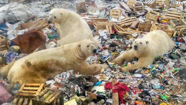 Peneliti menyebut terjadi peningkatan kasus saling makan (kanibalisme) antar-beruang kutub di Kutub Utara akibat pemanasan global dan aktivitas manusia.