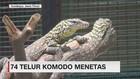 74 Telur Komodo Menetas di KBS