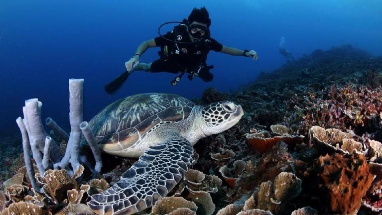 Bila takmenyuguhkankeindahan bawah laut Lombok, bukanlah MTMA The Movie namanya. Dalam episode ini juga kita akan kembali melihat kura-kura besar di lautan biru oleh para host.