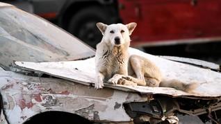 FOTO: Yaman Dikepung Rabies