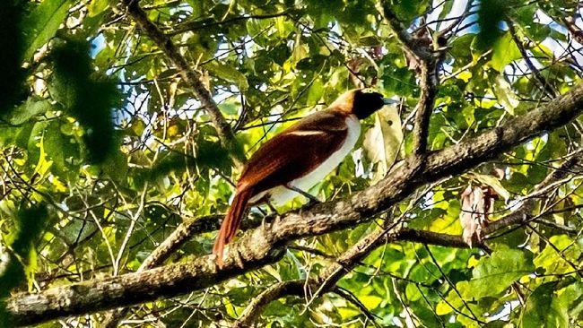 Melalui ekowisata turis bisa melakukan kegiatan wisata tanpa merusak hutan.