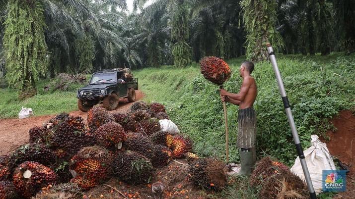 India Tangguhkan Izin Impor, Harga CPO Melorot Lagi