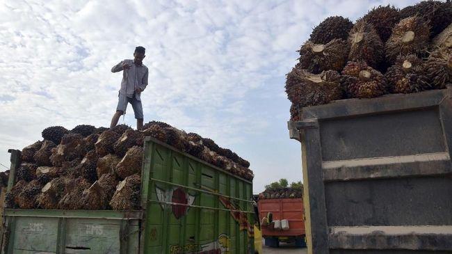 Gapki mencatat pertumbuhan ekspor sawit dan produk turunannya mencapai 15 persen per Juli menjadi US$1,86 miliar dibanding bulan sebelumnya.