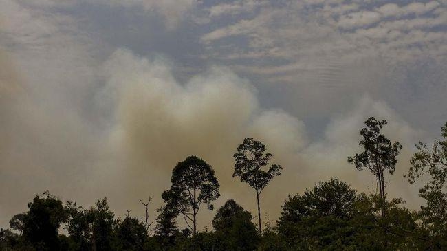 Badan Meteorologi, Klimatologi, dan Geofisika (BMKG) Stasiun Meteorologi Pekanbaru menyatakan kebakaran hutan melanda 11 Kabupaten di Riau pada Minggu (13/7).