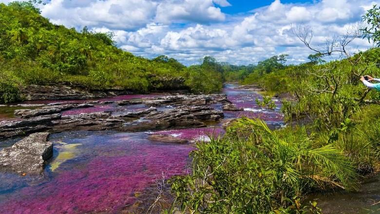 Intip Cano Cristales Sungai Tercantik Di Dunia Halloindo