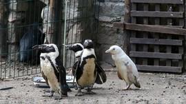Sepi Turis, Fauna di Kebun Binatang Taiwan Beranak Pinak