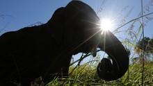 18 Gajah Mati Tersambar Petir di India