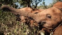 Ratusan Gajah di Botswana Mati Misterius