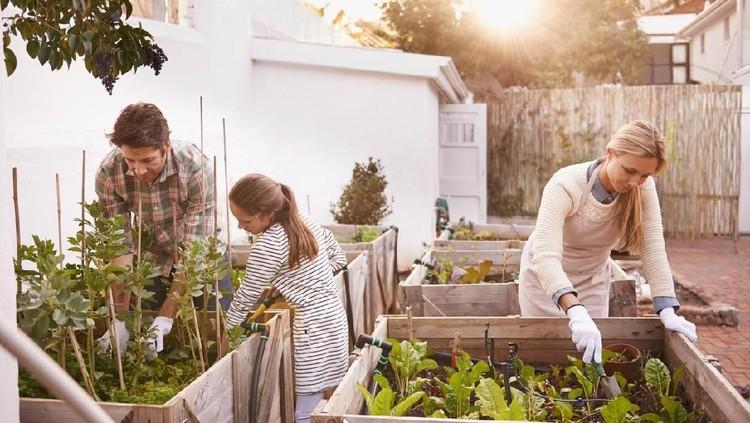 Bunda yang hobi berkebun, yuk mulai menanam tanaman obat. Selain menyegarkan mata juga berkhasiat bagi kesehatan.