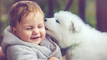 Pertolongan Pertama Saat Anak Dicakar atau Digigit Anjing