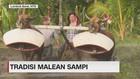 VIDEO: Tradisi Malean Sampi