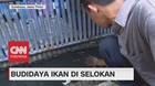 VIDEO: Begini Nih Cara Budidaya Ikan di Selokan