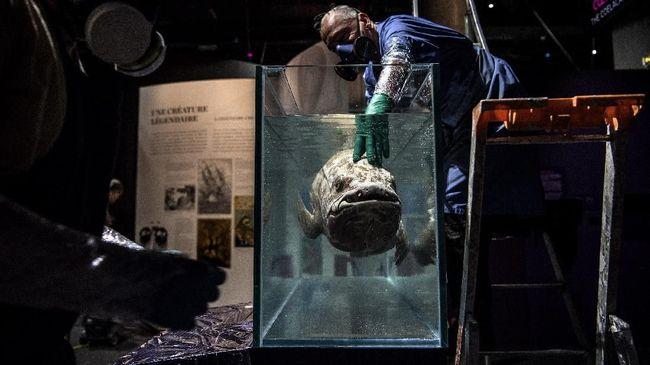 Coelacanth adalah ikan purba yang sudah ada sejak zaman dinosaurus, ahli baru menyadari spesies ini bisa hidup selama 100 tahun.