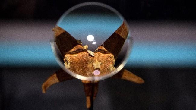 Beragam hewan bawah laut purba dipamerkan di Museum Nasional Paris.