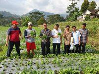 Kementan Genjot Pengembangan Sentra Sayuran Organik di Karanganyar