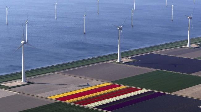 Belanda sedang berwarna-warni karena kebun Bunga Tulip di sana sedang bermekaran pada bulan ini.