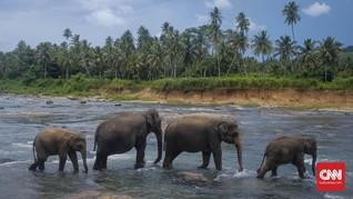 Ahli Prediksi Penyebab Ratusan Gajah Mati Misterius