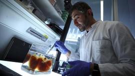 FOTO: Peneliti Jerman Kembangkan Organ Tembus Pandang