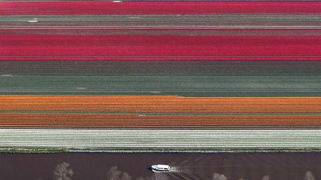 Dalam foto unik pilihan CNNIndonesia.com pekan ini, ada pemandian terbuka di Berlin, kuda-kuda dari Nepal, dan mekar bunga-bunga tulip di Belanda.