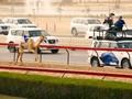 VIDEO: Warna-warni Tradisi Dubai