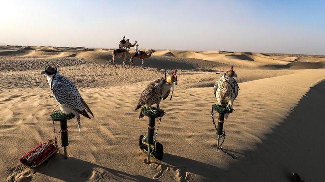 Selain unta, masyarakat Timur Tengah terutama Suku Badui juga sayang sayang dengan Burung Alap-alap.