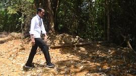 Fakta Food Estate Kalteng yang Akan Dibangun Jokowi