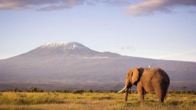 Will Gadd telah menyaksikan dari dekat kehancuran di Gunung Kilimanjaro yang ditimbulkan oleh krisis iklim.