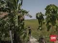 Bakar Ladang dengan Cara Adat, Tiga Petani Ditahan