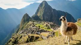 Ahli Temukan Mumi Llama, Persembahan untuk Dewa Suku Inca