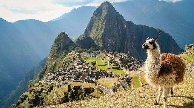 Llama merupakan keluarga dari camelid, atau sejenis unta. Namun keluarga unta di Peru tidak hanya llama saja, karena sekitar tujuh jenis lagi.