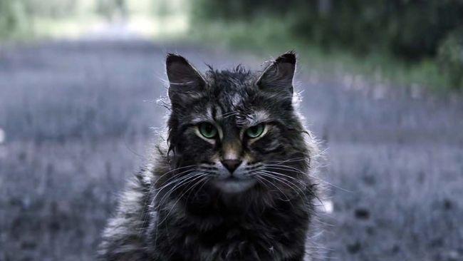 Leo Aktor Kucing Zombi Di Pet Sematary Mati Misterius