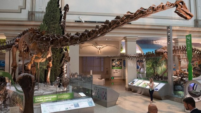 Museum Smithsonian di Washington baru saja kedatangan fosil T.rex.