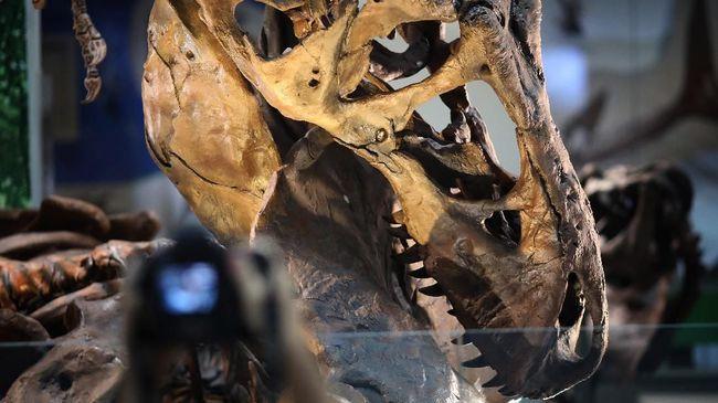 Smithsonian's National Museum of Natural History akhirnya bisa memajang kerangka T.rex.
