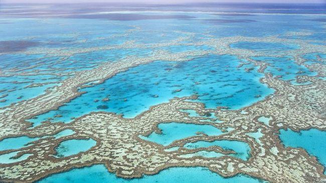 Situs Great Barrier Reef di Australia berhasil lolos dari 'Daftar Neraka' UNESCO, bersama dengan kanal Venice (Venesia) di Italia.