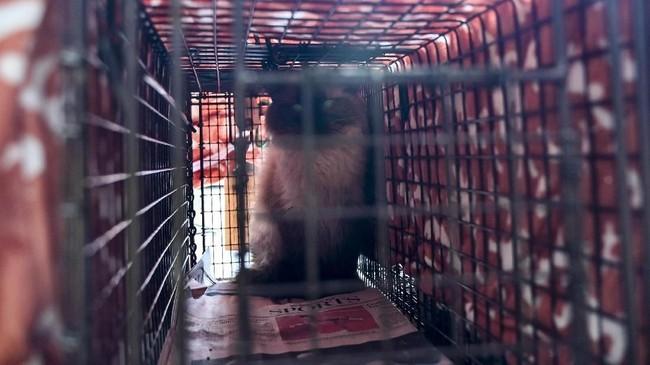 Sekelompok pembunuh bayaran bertampang menggemaskan dipekerjakan untuk memburu tikus.