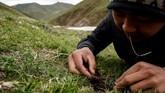 Pemanasan global berakibat pada menurunnya produksi jamur obat di China. Akibatnya, pendapatan pemburu jamur pun berkurang.