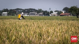 PLN Jalankan Program Sambungan Listrik untuk Pertanian