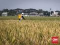 Soal Penangkapan Petani Padi IF8, Kementan Nilai Sudah Tepat