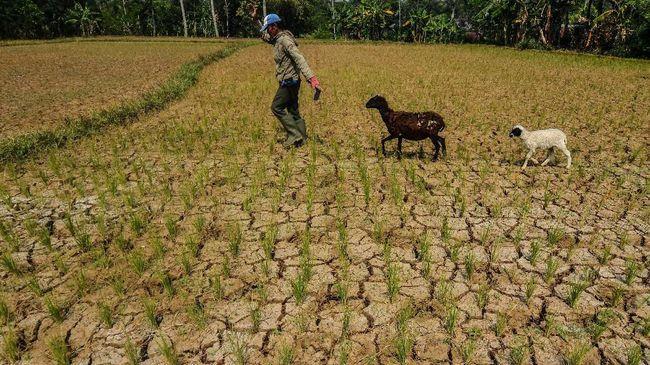 BMKG membeberkan alasan mengapa terjadi potensi kekeringan di beberapa daerah di Indonesia.