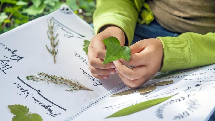 3 Jenis Herba yang Aman untuk Anak
