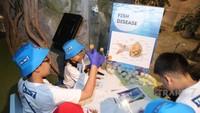 Pengetahuan anak juga bertambah dalam kegiatan ini. Misalnya, si kecil tahu contoh penyakit pada ikan.