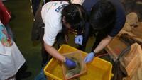 <div>Si kecil yang satu ini berani mengambil sampel cacing di tubuh ikan lho.</div><div></div>