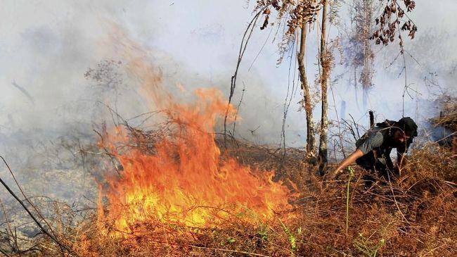Presiden Jokowi memerintahkan BNPB untuk segera menyelesaikan masalah kebakaran hutan. Perintah sama juga ia berikan pada Kapolri Tito Karnavian.