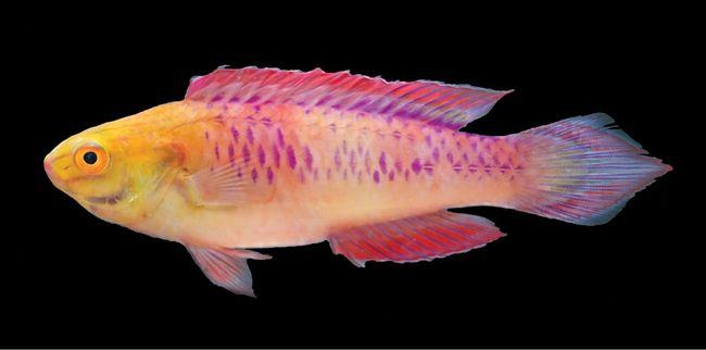 Ikan Wakanda Dan Temuan 71 Spesies Hewan Tumbuhan Baru 2019